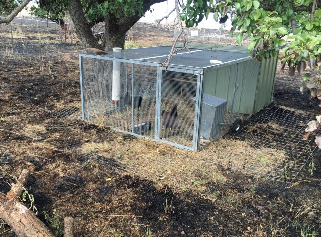 chook-house-day-after